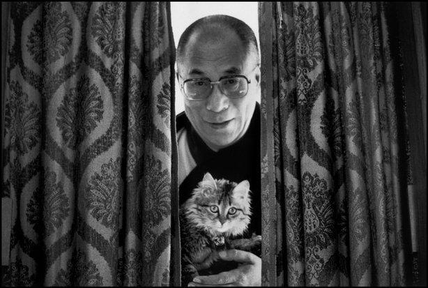 Dalai Lama with cat